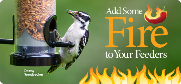 Add Some Fire to Your Feeders
